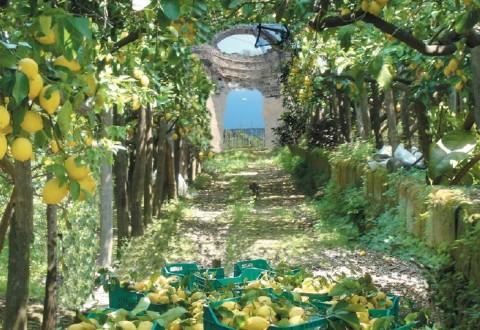 Giardini procidani un opportunita per tutti ass nico for Giardini meravigliosi